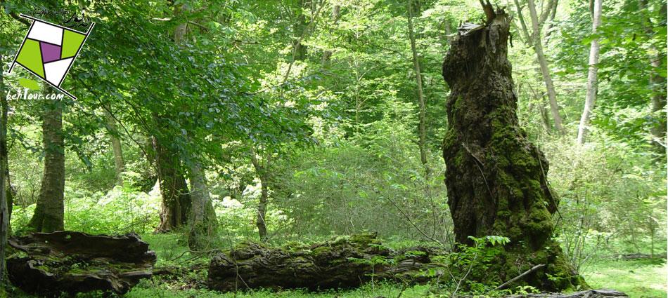 پارك جنگلي نور