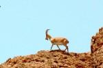 پارک ملی توران شاهرود